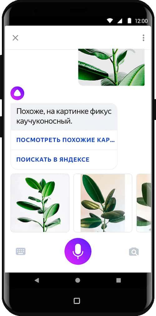 Яндекс Алиса распознает предмет на фото